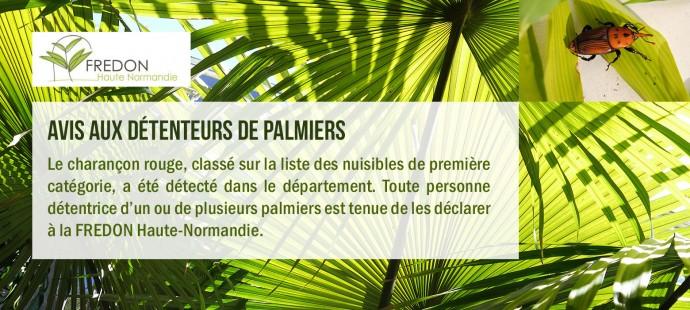 Actu-Palmier