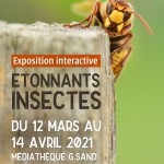 Exposition etonnants insectes