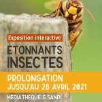 Exposition etonnants insectes-prolongation