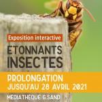 Exposition etonnants insectes-prolongation