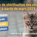 actu stérilisation chats errants